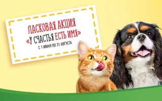 Как зарегистрировать чек Friskies и принять участие в ласковой акции «У счастья есть имя»